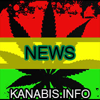 newsy, cannabis, medyczna, marihuana, cbd, rso